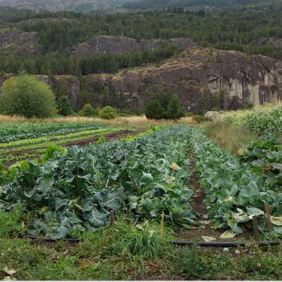 Agroecology and organic farming